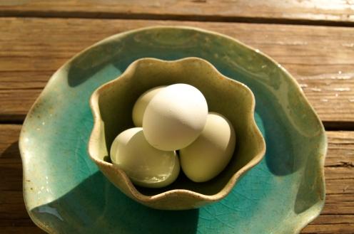 Ameraucana blue heirloom eggs