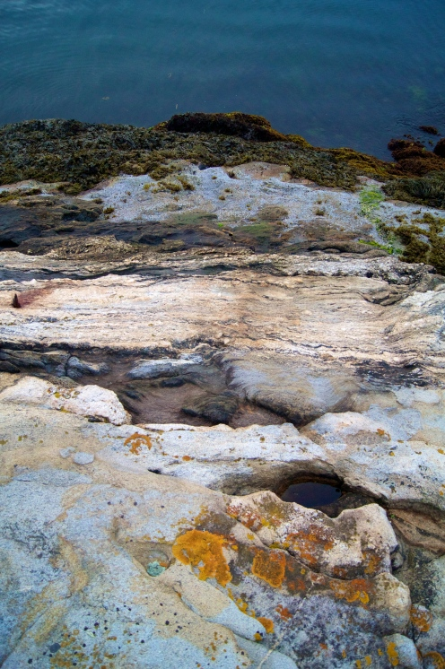 the rocky shore of maine