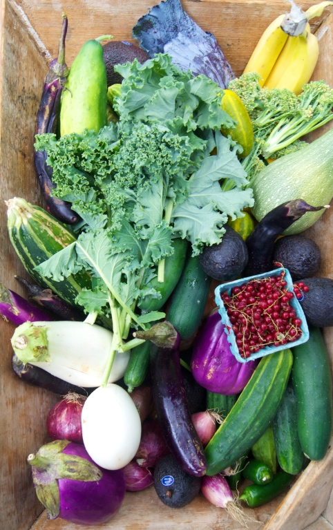 camping veggies!