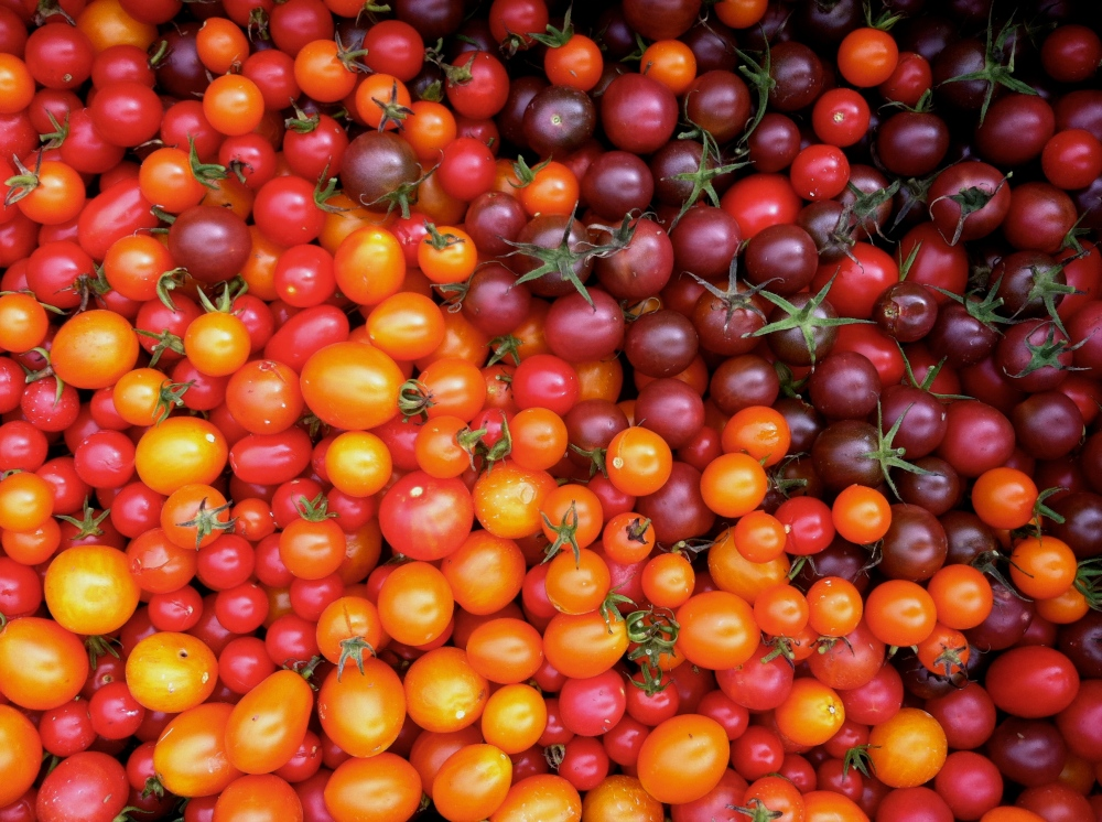 A rainbow of sweet cherry tomatoes