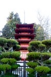 Japanese tea garden in SF