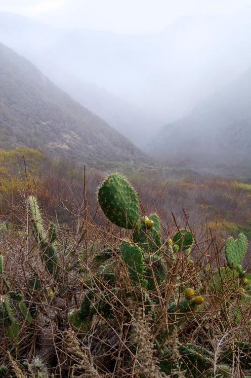 Garraputa State Park