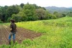 Cannard Farm