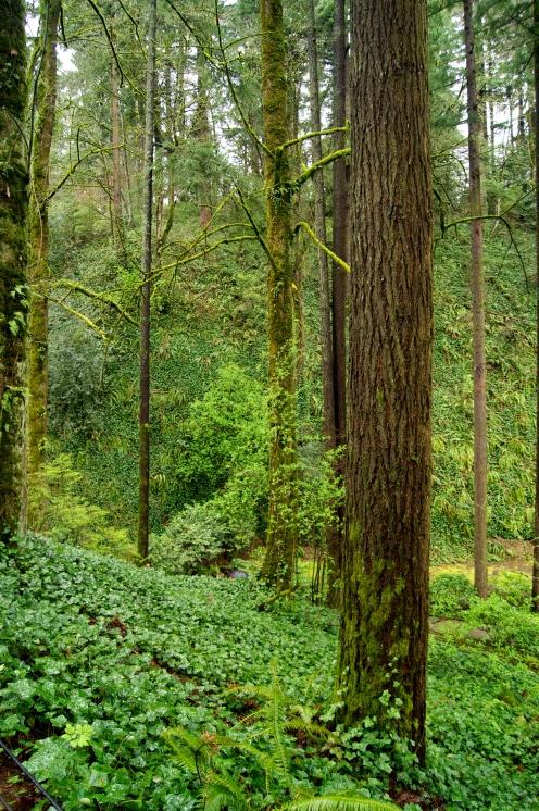 Portland is green green green.